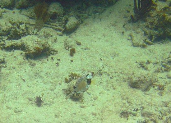 Mayan Beach Garden: colorful fish