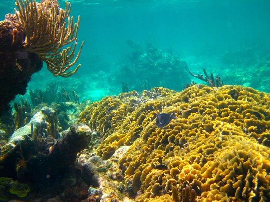 Mayan Beach Garden: snorkeling