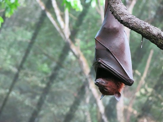 Night Safari : bat