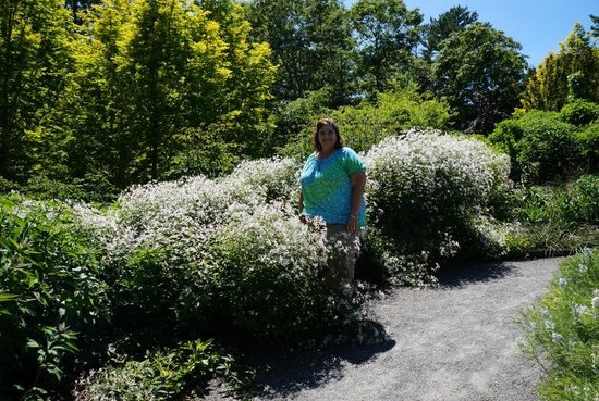 Coastal Maine Botanical Gardens: Beautiful blooming flowers everywhere