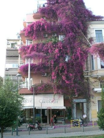 Ithaki: The 5 story high flowering vine drops petals on the restaurant