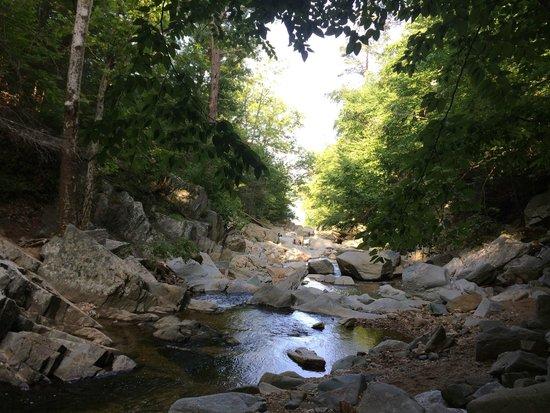 Scott's Run Nature Preserve: Beautiful