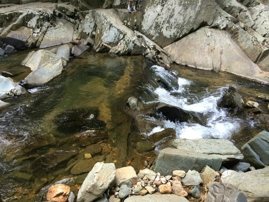 Scott's Run Nature Preserve: Streams