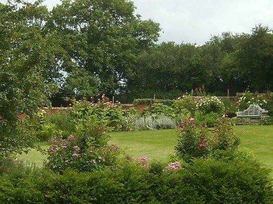 Hall Farm B&B: walled garden