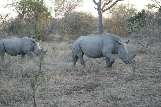 Serondella Game Lodge: Rhinos