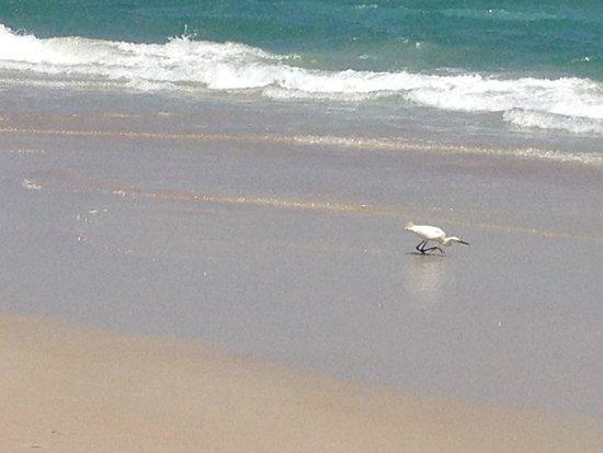 Beach at Daytona Beach: Exceeded expectations