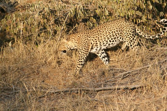 Serondella Game Lodge: Leopard