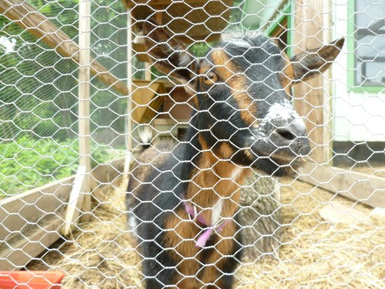 Taltree Arboretum and Gardens: animals in garden