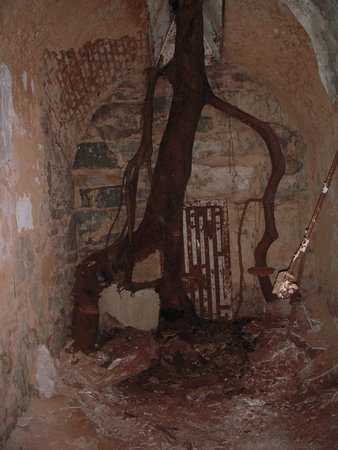 Eastern State Penitentiary: Tree overgrown in the room
