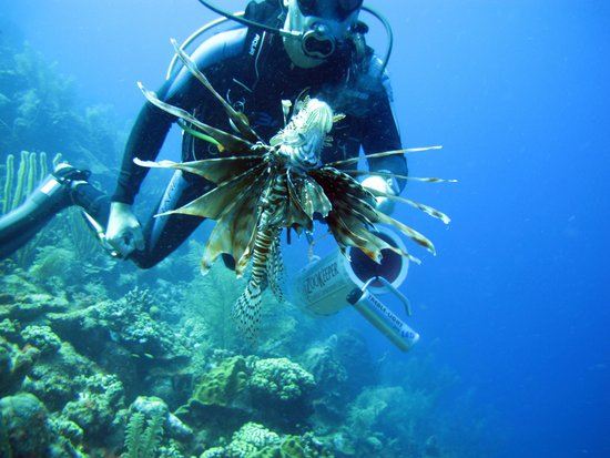 VIP Diving: Jacht op Lion Fish