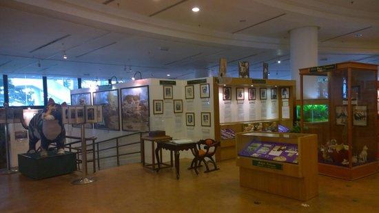 Cat Museum: Inside the museum