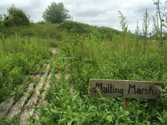 Malting Farm: Malting Marsh for pond dipping