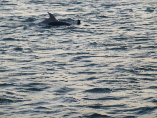 Amelia River Cruises: Dolphins