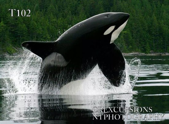 Campbell River Whale and Bear Excursions