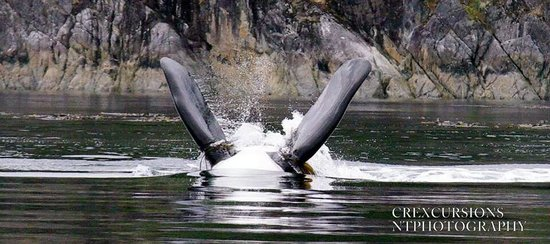 Campbell River Whale and Bear Excursions: upside down