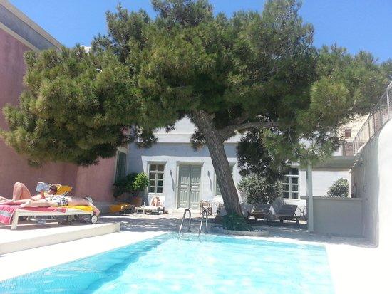 Aria Lito Mansion: Pool with pine tree