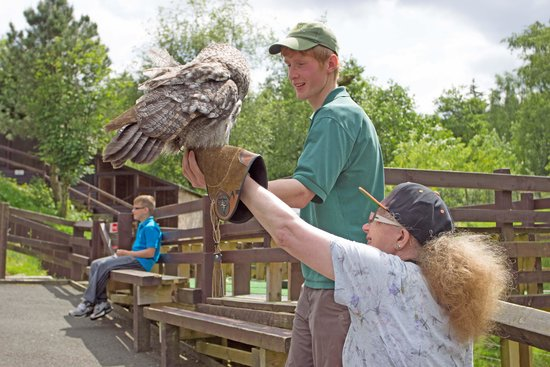 Kielder Water Bird of Prey Centre: Don't eat the visitors!