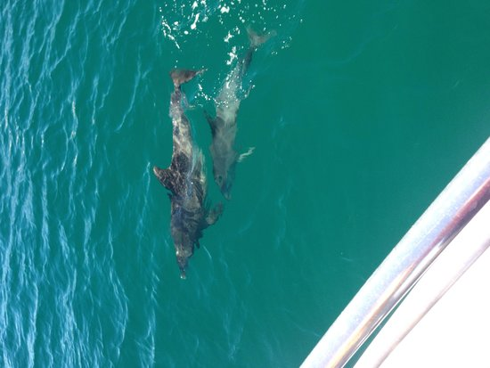 Jervis Bay Wild Cruises: The dolphins swim along with the boat! So cute