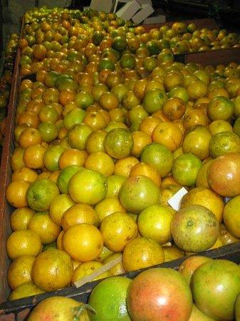 Boyett's Grove : Citrus