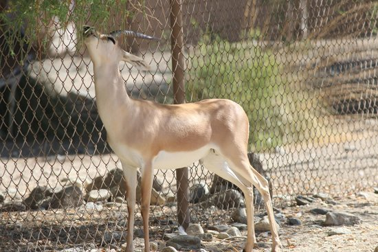 Living Desert Zoo & Gardens: Up close and personal