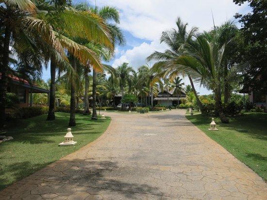 Caribe Club Princess Beach Resort & Spa: Lush views walking from the lobby