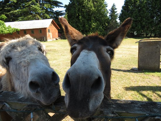 Farmhouse Bed & Breakfast: the donkeys