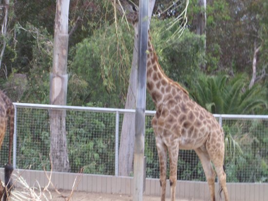 San Diego Zoo: Zoo