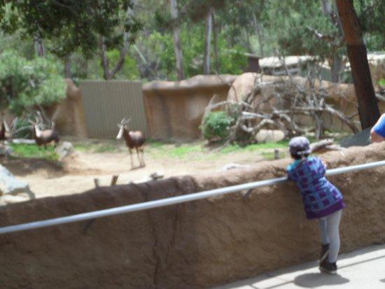 San Diego Zoo : Zoo