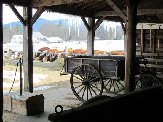 Remick Country Doctor Museum & Farm: cow barn and old wagons