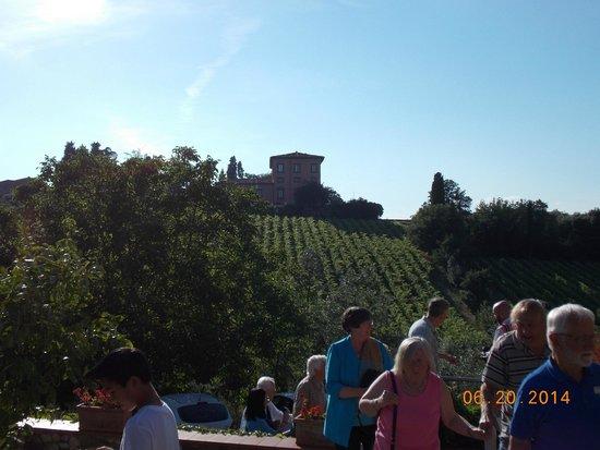 Ristorante Albergaccio: Vineyard from terrace