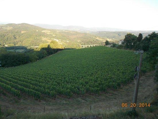 Ristorante Albergaccio: The Vineyard