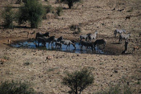 Ngoma Safari Lodge: More animals at the watering hole
