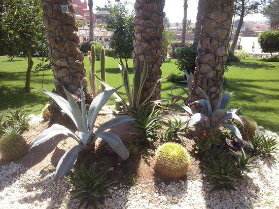 Sharm Grand Plaza: roślinność