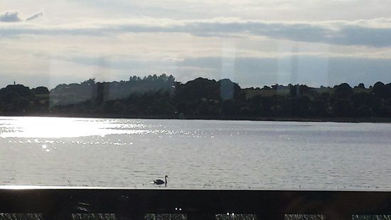 Wineport Lodge: Excuse the sun reflection but the swan on the lake had to be photographed!
