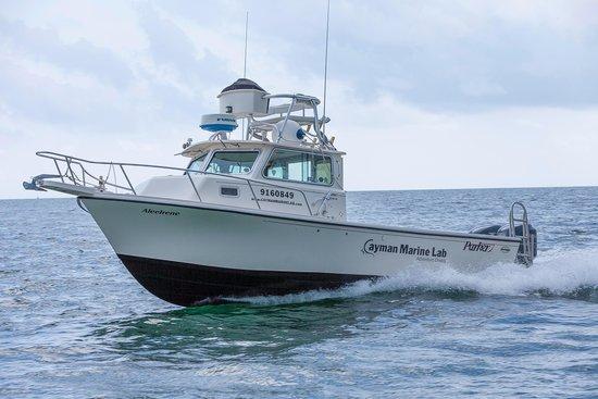 Cayman Marine Lab: speeding you to the best sites