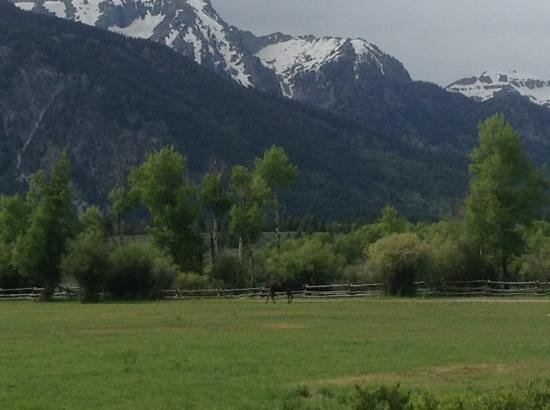R Lazy S Ranch : View of the Grand Tetons from our cabin.