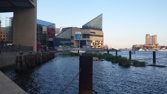 Inner Harbor: At the harbor