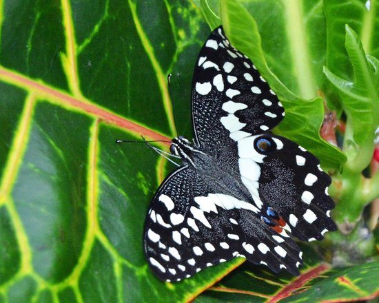 Butterfly Wonderland: Black and white butterfly