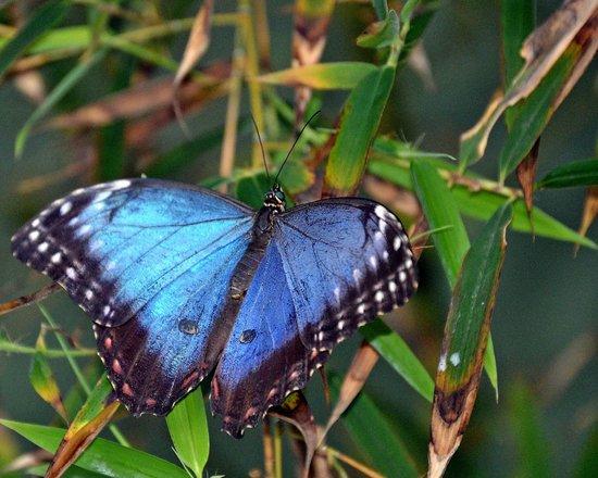 Butterfly Wonderland: Brilliant blue butterfly