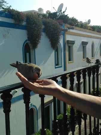 Hotel The Puerto de Mogan: Friendly local!