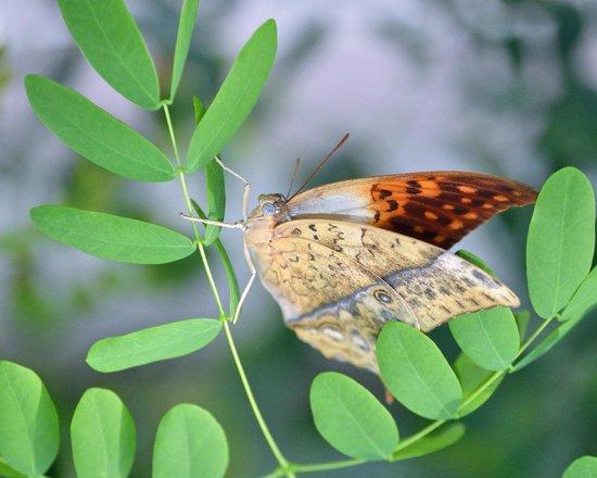 Butterfly Wonderland: Butterfly on twig