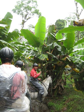 Arenal Wilberth Stables: Banana plantation with Enrique!