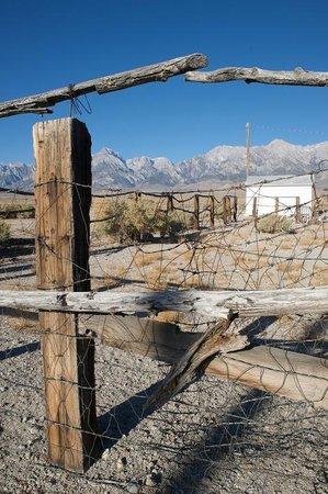 Mt. Williamson Motel: Sierra Nevada from behind the motel