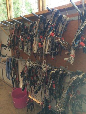 René Egli Winsurfing & Kite : Equipment at Reneé Egli