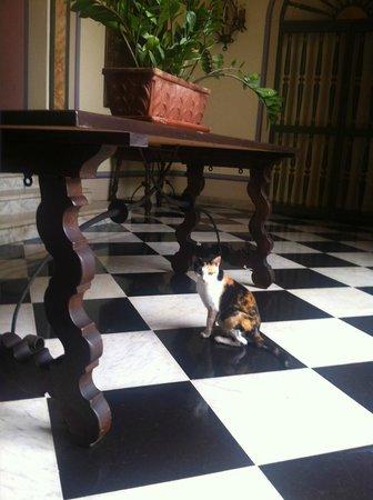 Hotel El Convento: Trixie