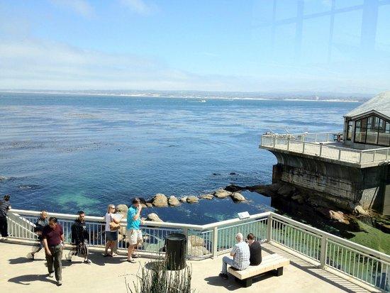 Monterey Bay Aquarium: Outdoor view of the Open Ocean exhibit
