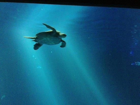 Monterey Bay Aquarium: Indoor view of the Open Ocean exhibit
