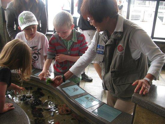 Monterey Bay Aquarium: Rock Pool exhibit