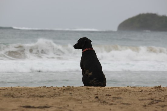 Red Frog Bungalows: Tequila the RFB mascot checking out the surf