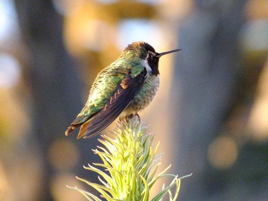 Ragged Point Inn: Hummingbird
